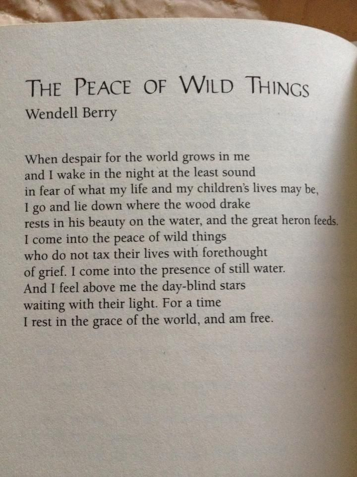 happy birthday wendell berry the raucous rooster